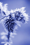 Frost-Eiskristalle auf Distel Weed Lizenzfreies Stockfoto
