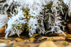 Frost em ramos Fotografia de Stock Royalty Free