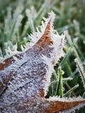 Frost em uma folha fotografia de stock