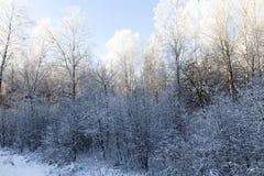 Frost en árbol Foto de archivo libre de regalías