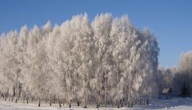 Frost en árboles Imagen de archivo libre de regalías