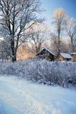 Frost en árboles foto de archivo