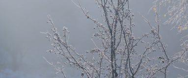 Frost en árboles Fotos de archivo