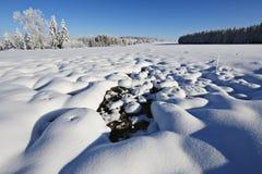 Frost en árboles - Forest Sumava bohemio checo Imagen de archivo libre de regalías