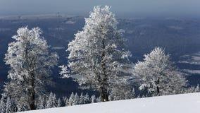 Frost en árboles - Forest Sumava bohemio checo Foto de archivo