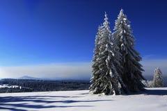 Frost en árboles - Forest Sumava bohemio checo Fotos de archivo