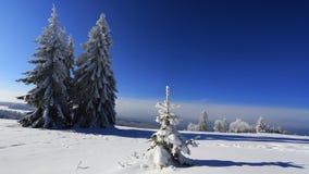 Frost en árboles - Forest Sumava bohemio checo Fotografía de archivo libre de regalías
