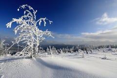 Frost en árboles - Forest Sumava bohemio checo Imágenes de archivo libres de regalías