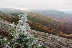 Frost en bosque del otoño del fondo del árbol del Año Nuevo en el MES cárpato Foto de archivo libre de regalías
