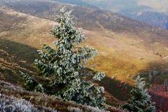 Frost en bosque del otoño del fondo del árbol del Año Nuevo en el MES cárpato Imagen de archivo libre de regalías
