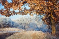 Frost en el bosque Fotografía de archivo libre de regalías
