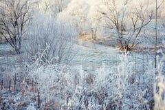 Frost en el bosque Fotografía de archivo
