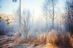 Frost en el bosque Imágenes de archivo libres de regalías