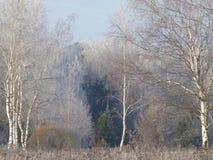 Frost en el bosque Fotos de archivo libres de regalías