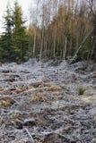 Frost en el bosque del decano Fotos de archivo