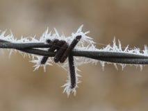 Frost en el primer del alambre de púas Foto de archivo libre de regalías