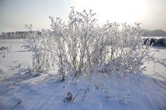 Frost en la hierba Fotografía de archivo libre de regalías
