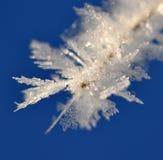 Frost en la ramificación Fotos de archivo libres de regalías