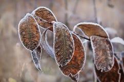 Frost en las hojas Fotografía de archivo