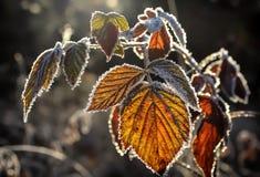 Frost en las hojas Imagen de archivo