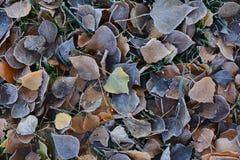 Frost en las hojas caidas del álamo y del abedul El sol se levanta sobre las nubes del mar y del oro Foto de archivo libre de regalías