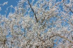 Frost en las plantas Imágenes de archivo libres de regalías
