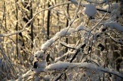Frost en las ramas de un abedul en un fondo del cielo azul claro Foto de archivo libre de regalías