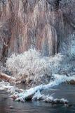 Frost en las ramas del río Fotografía de archivo libre de regalías