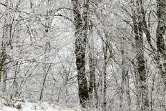 Frost en los árboles Fotos de archivo