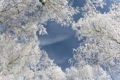 Frost en los árboles foto de archivo libre de regalías