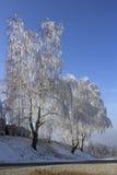 Frost en los árboles Imagenes de archivo