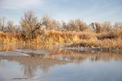 Frost en los árboles e hierba, caída en todos los colores Fotos de archivo
