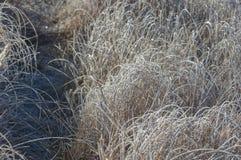 Frost en los árboles e hierba, caída en todos los colores Fotografía de archivo