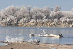 Frost en los árboles e hierba, caída en todos los colores Foto de archivo