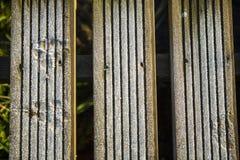 Frost en paseo marítimo imagen de archivo libre de regalías