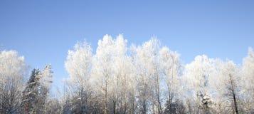 Frost en ramas de árbol Fotos de archivo libres de regalías
