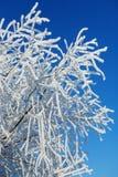Frost en ramas de un árbol Foto de archivo libre de regalías