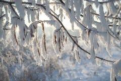 Frost en ramas de un árbol Imagenes de archivo