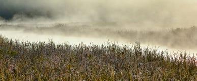 Frost encrusted marshland foliage in sunrise mist. Stock Images