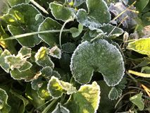 Frost est beau image libre de droits