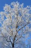 Frost et neige ont couvert l'arbre Photo stock