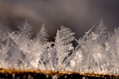 Frost förgrena sig på Arkivbild