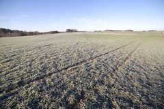 Frost in field. Stock Photos