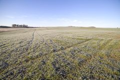 Frost in field. Royalty Free Stock Image