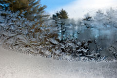 Frost flowers on window. Pane with blue sky and pine trees in background Stock Images