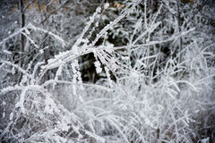 Frost forest in backlight Royalty Free Stock Image