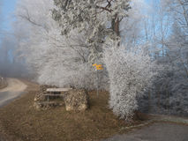 Frost in the forest of the Swiss Alps Royalty Free Stock Photo