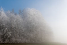 Frost in the forest of the Swiss Alps Royalty Free Stock Images