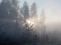 Frost in the forest of the Swiss Alps Royalty Free Stock Photography
