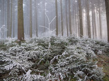 Frost in the forest of the Swiss Alps Royalty Free Stock Photos